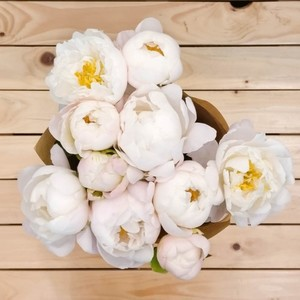 City of Angels Peony | Buy Flowers in Dubai UAE | Gifts