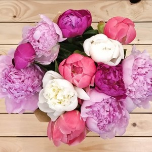 Euphoria Peony | Buy Flowers in Dubai UAE | Gifts