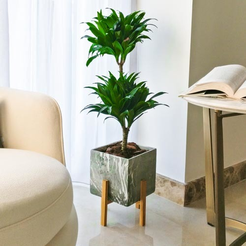 Tropical Rain Forest | Buy Flowers in Dubai UAE | Gifts