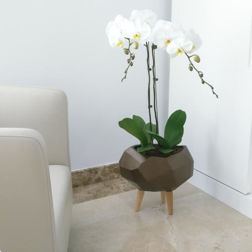 Orchid Monument | Buy Flowers in Dubai UAE | Womens Day Gifts