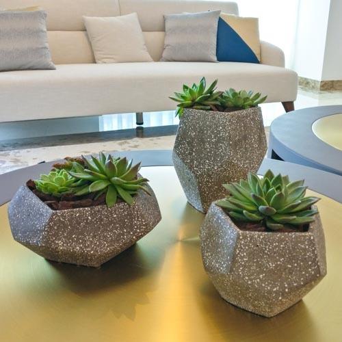 Succulent Trio | Buy Flowers in Dubai UAE | Gifts